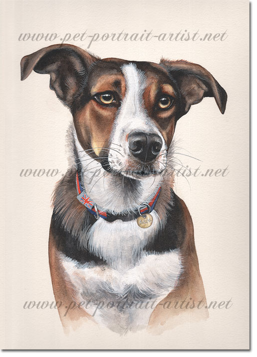 Dog Portrait of Anzac, by Joanna Culley acclaimed animal artist