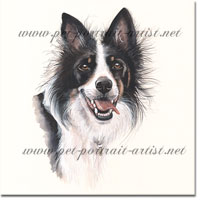 Portrait of a Border Collie by Joanna Culley
