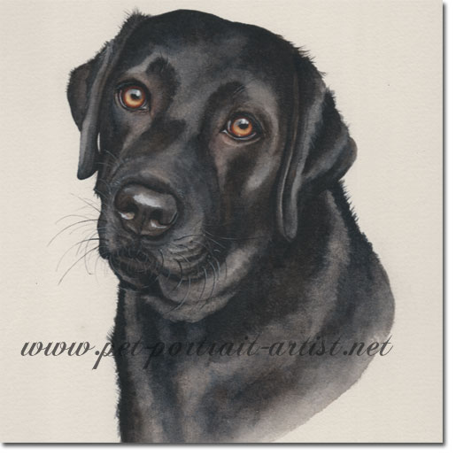 DogPortrait of Inka, Black Lab, by Joanna Culley