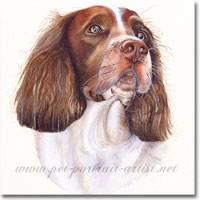Portrait of a Springer Spaniel by Joanna Culley
