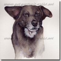Dog portrait of Lucy in watercolour paint, by Joanna Culley, Pet Portrait Artist
