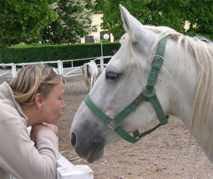 Joanna Culley - Pet Portrait Artist, with a Lipizzaner Horse in Slovenia