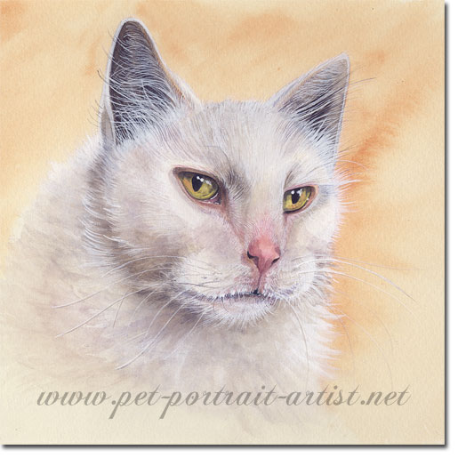 Watercolour Cat Portrait of Brumus, by Joanna Culley