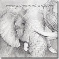 Pencil drawing of two elephants by Joanna Culley