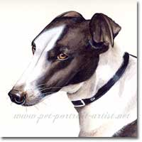 Greyhound Painting in watercolour, by Joanna Culley, Pet Portrait Artist
