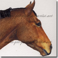 A pet portrait of Man of Kashmir Thoroughbred Horse by Joanna Culley