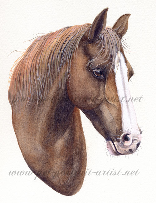 Equine portrait in Watercolour - Amy, by Joanna Culley