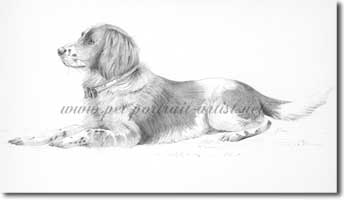Pencil Dog Portrait, by Joanna Culley, Click on image to see enlarged version.
