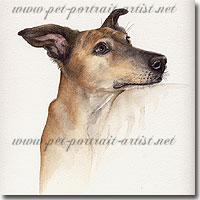 Dog Portrait of a Lurcher by Joanna Culley