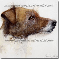 Portrait of a pet jack russell terrier (Dolly) by Joanna Culley
