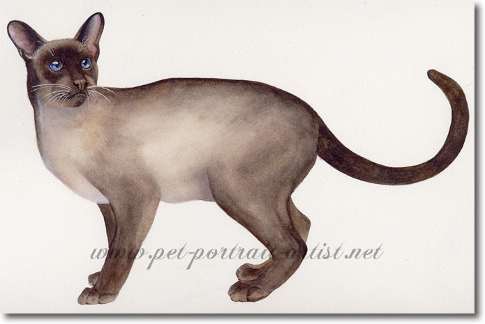 Portrait of a Siamese cat, in watercolour, by Joanna Culley