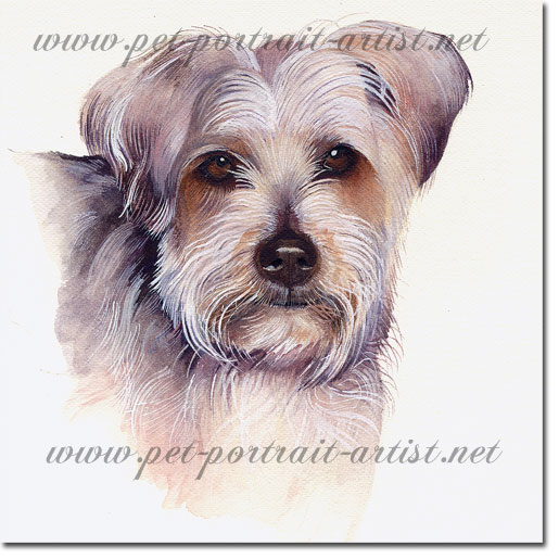 Watercolour Portrait of a Yorkshire Terrier Dog,  by Joanna Culley